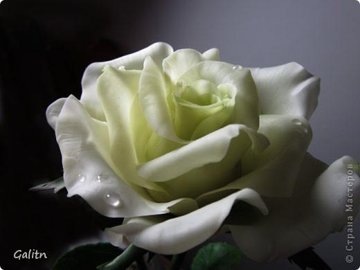 И снова роза.  Есть работы  в процессе, но очень хотелось, что то выложить ко Дню Победы. фото 1
