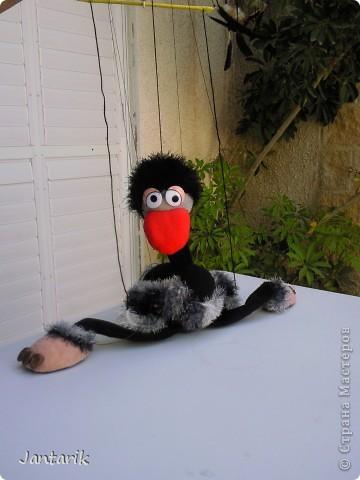 Это моя первая кукла-марионетка,которую я сделала на курсе кукол.Получился страусёнок по имени Муги.Вот такое странное имячко.Но мне кажется,что ему оно подходит. Кукла вырезана из поролона,сверху обклеена материалом Флиз,волосы,тело и крылья связаны крючком из пряжи-травки. Муги любит посидеть на дереве-оттуда далеко видно. фото 6
