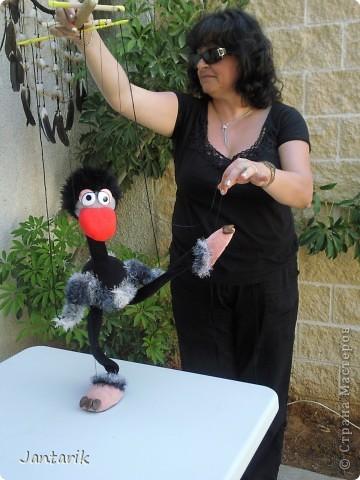 Это моя первая кукла-марионетка,которую я сделала на курсе кукол.Получился страусёнок по имени Муги.Вот такое странное имячко.Но мне кажется,что ему оно подходит. Кукла вырезана из поролона,сверху обклеена материалом Флиз,волосы,тело и крылья связаны крючком из пряжи-травки. Муги любит посидеть на дереве-оттуда далеко видно. фото 7