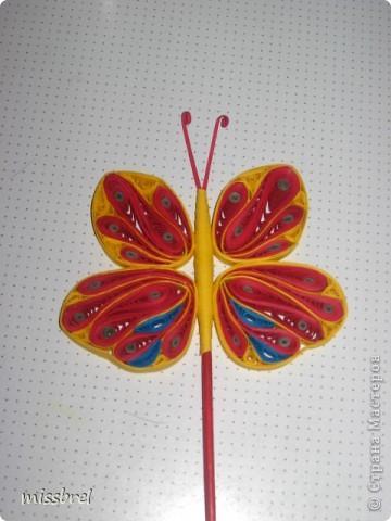 Прилетели бабочки! фото 4