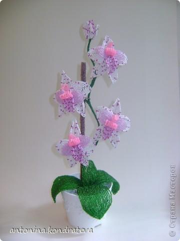 """Эту орхидею я сделала на """"Радуге рукоделиЙ"""", на онлайне под руководством Оксаночки - dikaja ledi. Огромное ей спасибо, за то что научила делать такую красоту."""