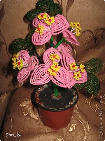 Это подарок моей куме на день рождения. Цветок - бугенвиллия. фото 1