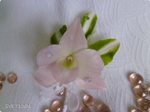 Дендробиумы бывают очень разные по размеру , форме лепестков и расцветке. Я предлагаю такой вариант. фото 16