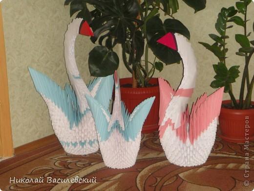 Семья лебедей фото 1