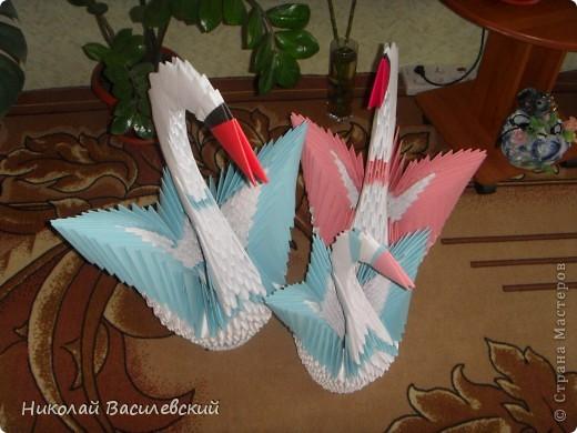 Семья лебедей фото 3