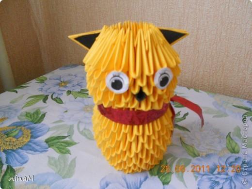 желтый котик фото 1