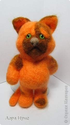 Кот Апельсин фото 1