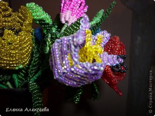Вот такие яркие цветы фото 5