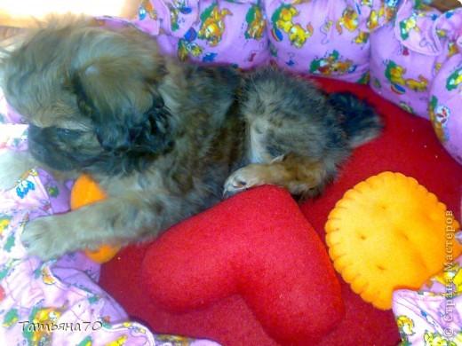 Вот такую лежанку для собаки я сшила из фланели, наполнитель - холлофайбер фото 4