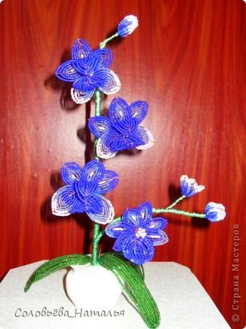 "Орхидея ""Сумерки"" фото 2"