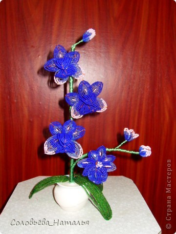 "Орхидея ""Сумерки"" фото 1"