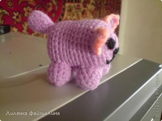 мишка фото 5