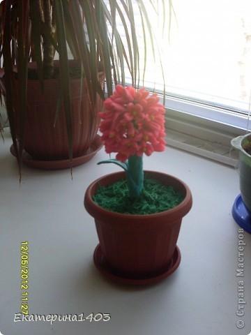 Вот мой цветочек. фото 1