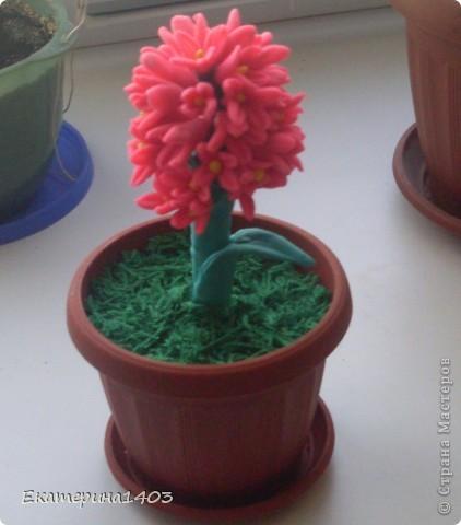 Вот мой цветочек. фото 2