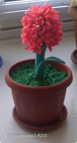 Вот мой цветочек. фото 3