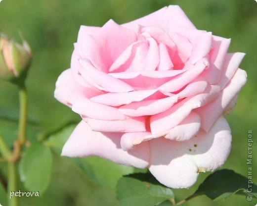 Сегодня народ Украины отмечает День матери.  Этот праздник набирает обороты, как в России, так и в Украине. В России мамин день  празднуют ежегодно в последнее воскресенье ноября, в 2012 году  - 11 ноября. В Украине — второе воскресенье мая. Все цветы мира - у Ваших ног, дорогие наши!  фото 16