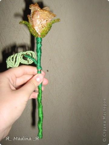 Это пустынная роза - роза Таиф)так мне шепнуло вдохновение) фото 2