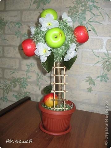 Вот такое маленькое, скромненькое деревце с яблоками. фото 2