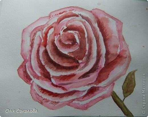 Рисовать я учусь у Екатерины Мороз. Вот, после посещения тренинга по акварели вышла с этими картинами фото 1
