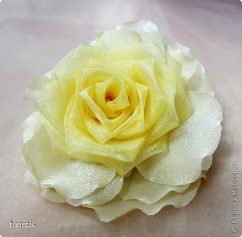 У меня опять расцвели розы фото 2