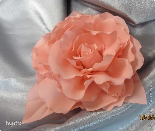 У меня опять расцвели розы фото 1
