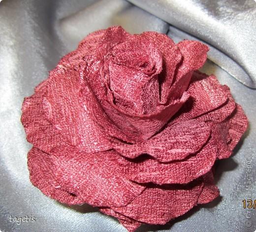 У меня опять расцвели розы фото 5