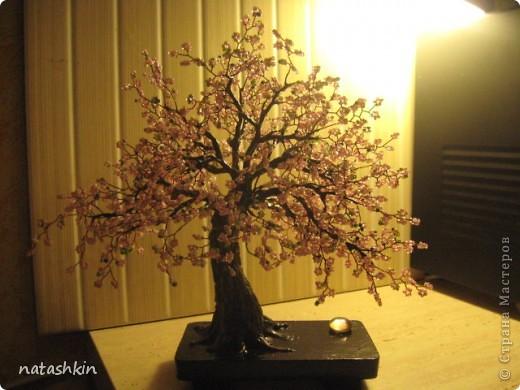 Здравтсвуйте,  жители  Страны  Мастеров!  Я  опять  с  сакурой.  Не  дает  мне  это  дерево  покоя.  Сегодня  она  у  меня  старая  и  раскидистая, но  еще  очень  даже  цветущая  и,  пожалуй,  плодоносящая. фото 7