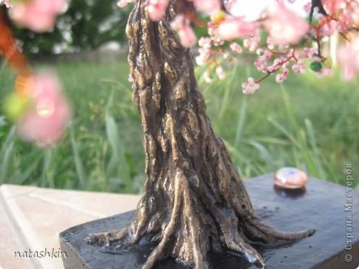 Здравтсвуйте,  жители  Страны  Мастеров!  Я  опять  с  сакурой.  Не  дает  мне  это  дерево  покоя.  Сегодня  она  у  меня  старая  и  раскидистая, но  еще  очень  даже  цветущая  и,  пожалуй,  плодоносящая. фото 3
