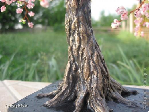 Здравтсвуйте,  жители  Страны  Мастеров!  Я  опять  с  сакурой.  Не  дает  мне  это  дерево  покоя.  Сегодня  она  у  меня  старая  и  раскидистая, но  еще  очень  даже  цветущая  и,  пожалуй,  плодоносящая. фото 4