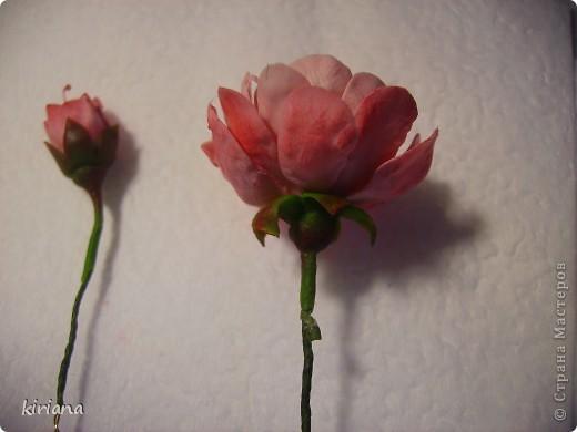 Листья сакуры вот такой формы, но могут быть и просто овальные, зависит от сорта. фото 11