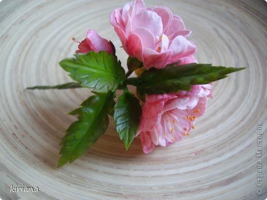 Листья сакуры вот такой формы, но могут быть и просто овальные, зависит от сорта. фото 16