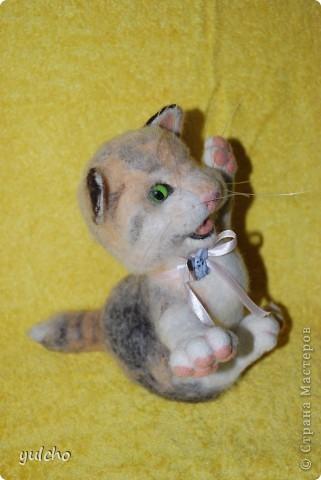 Котя с большим носом фото 6
