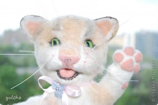 Котя с большим носом фото 2