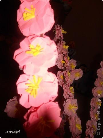 Сакура фото 7