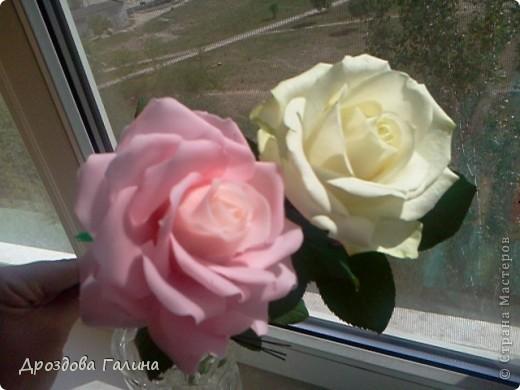 Привет всем!!!Вот и я осваиваю потихоньку искусство лепки.На этот раз я слепила розу,хочу сразу сказать,что эта роза получилась лучше всех предыдущих,наверно потому что лепила с натуры.Очень хотела добиться правельной формы бутона,ну вроде получилось-судить вам,дорогие рукодельницы! фото 3