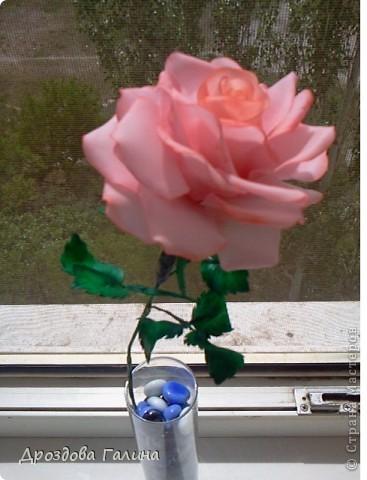 Привет всем!!!Вот и я осваиваю потихоньку искусство лепки.На этот раз я слепила розу,хочу сразу сказать,что эта роза получилась лучше всех предыдущих,наверно потому что лепила с натуры.Очень хотела добиться правельной формы бутона,ну вроде получилось-судить вам,дорогие рукодельницы! фото 4