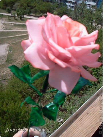 Привет всем!!!Вот и я осваиваю потихоньку искусство лепки.На этот раз я слепила розу,хочу сразу сказать,что эта роза получилась лучше всех предыдущих,наверно потому что лепила с натуры.Очень хотела добиться правельной формы бутона,ну вроде получилось-судить вам,дорогие рукодельницы! фото 6
