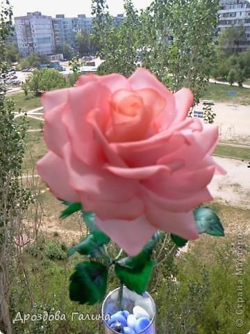 Привет всем!!!Вот и я осваиваю потихоньку искусство лепки.На этот раз я слепила розу,хочу сразу сказать,что эта роза получилась лучше всех предыдущих,наверно потому что лепила с натуры.Очень хотела добиться правельной формы бутона,ну вроде получилось-судить вам,дорогие рукодельницы! фото 5