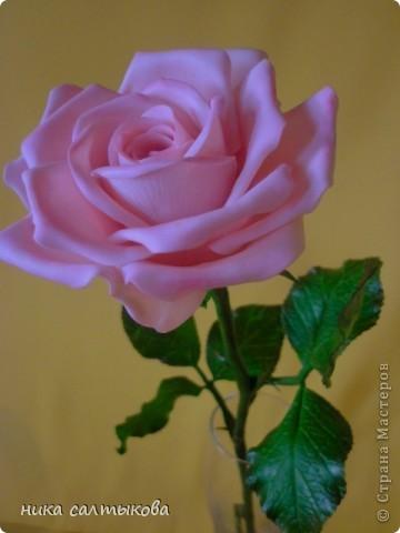 Эту розу слепила для одной студии, с которой я активно сотрудничаю. Судить вам, конечно! фото 1