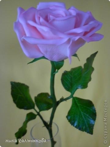 Эту розу слепила для одной студии, с которой я активно сотрудничаю. Судить вам, конечно! фото 2