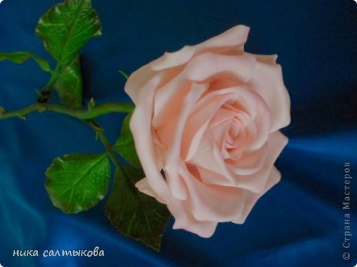 Эту розу слепила для одной студии, с которой я активно сотрудничаю. Судить вам, конечно! фото 5