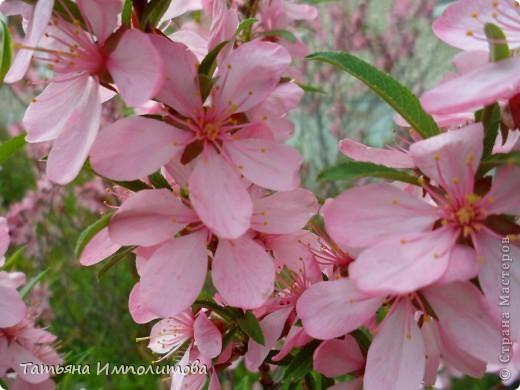 Весна,весна фото 1