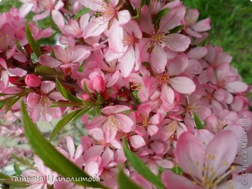 Весна,весна фото 3