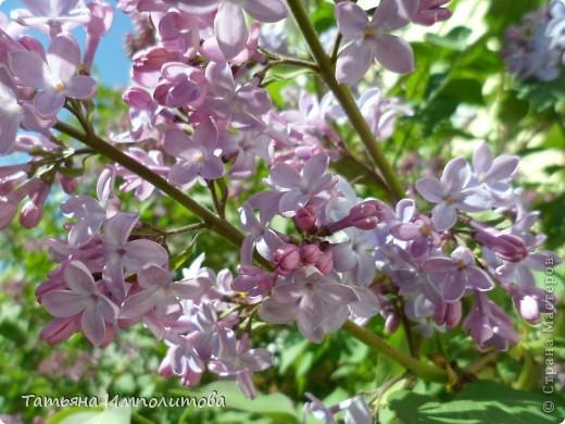 Весна,весна фото 4
