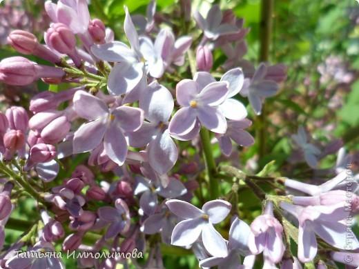 Весна,весна фото 5