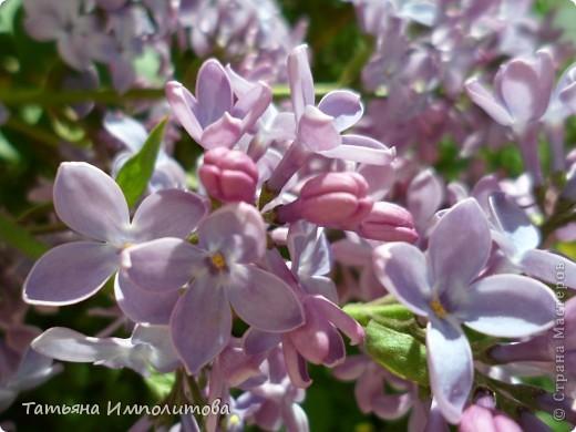 Весна,весна фото 6