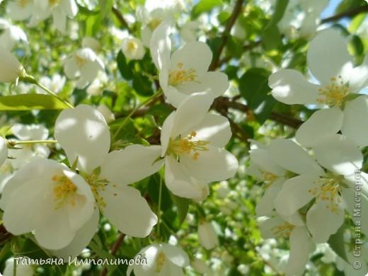 Весна,весна фото 7