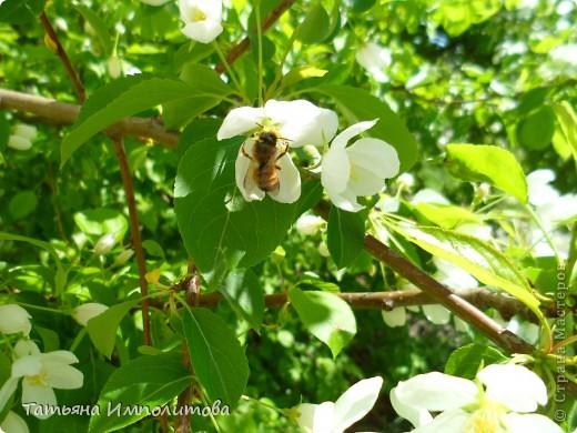 Весна,весна фото 8