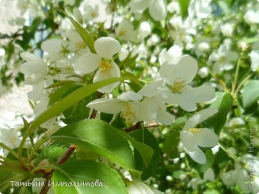 Весна,весна фото 9