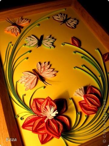 бабочки для радости фото 1